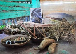 Dominican dried herbs used for natural remedies - Outback Adventures Punta Cana