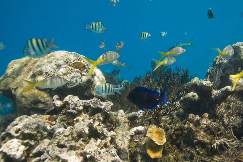 coral reef with tropical fish in Puerto Plata - Dominican Republic