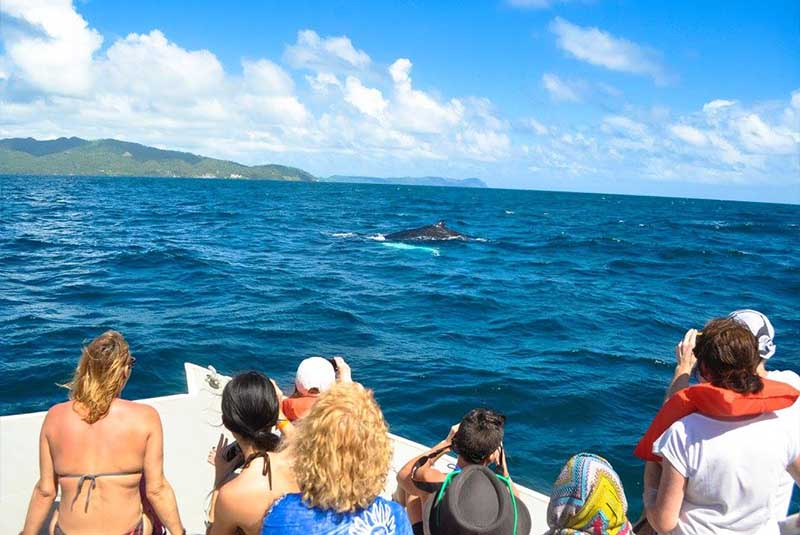 group enjoying to see humpback whales while on whale watching tours in Samana - Dominican republic