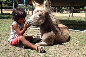 child playing with donkey in Maimon - Puerto Plata