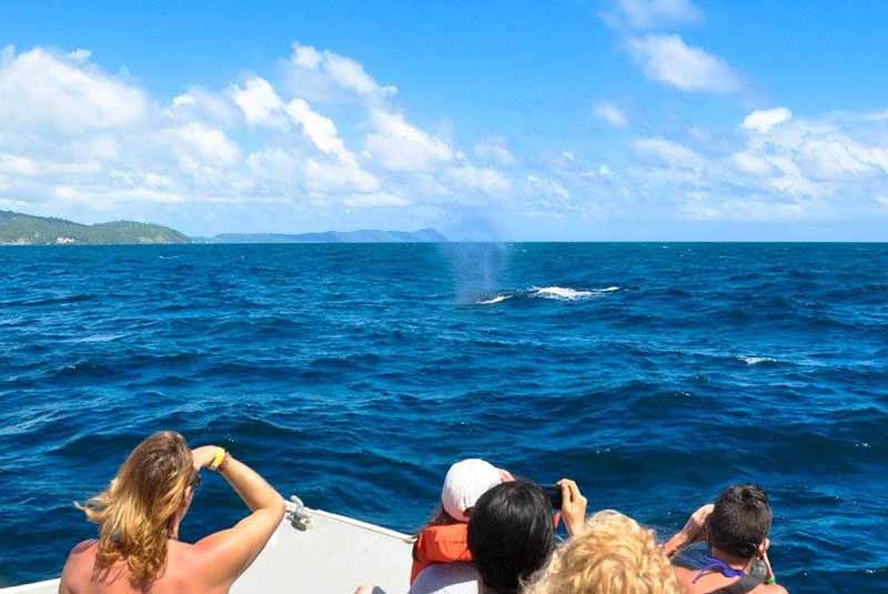 people taking pictures of humpback whales in Samana - Dominican Republic