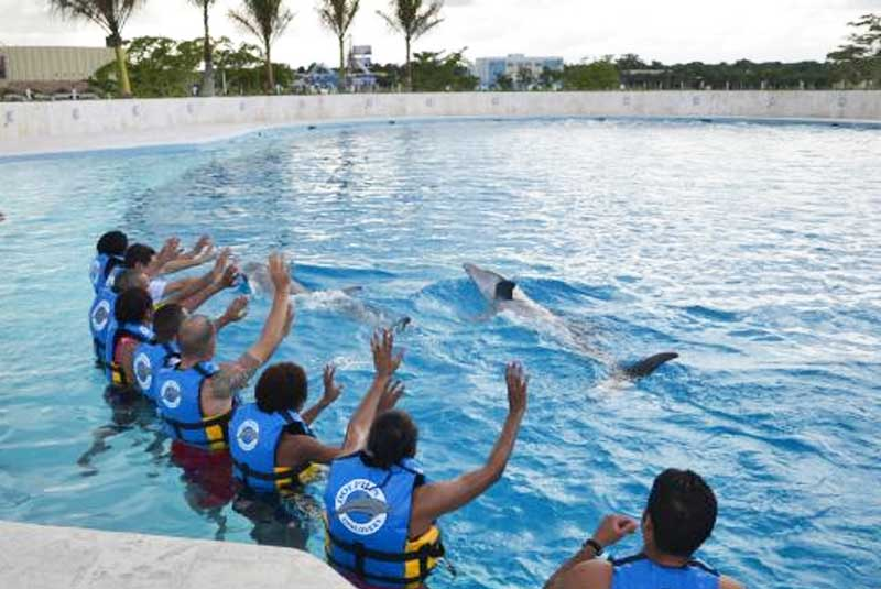 people participating in dolphin show in Punta Cana - Dominican Republic