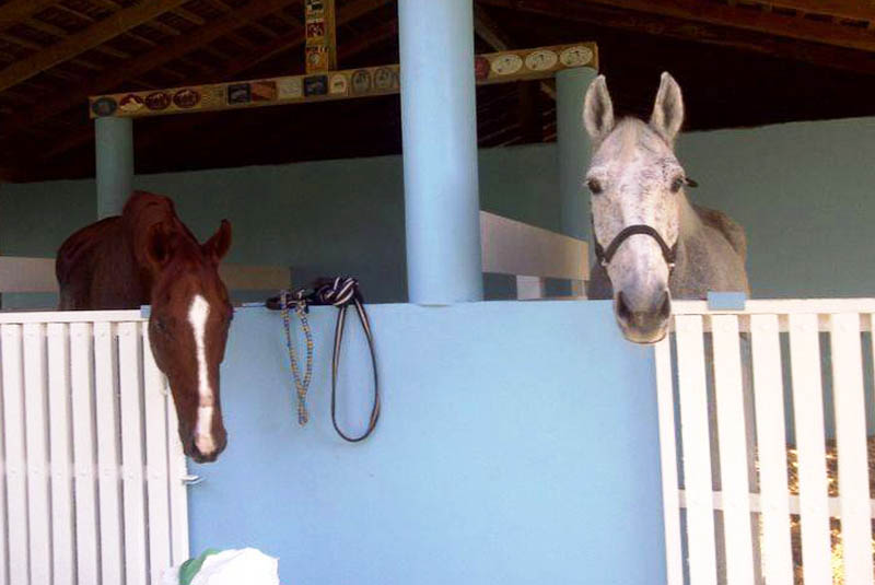 horses at stable on ranch in Maimon - Puerto Plata