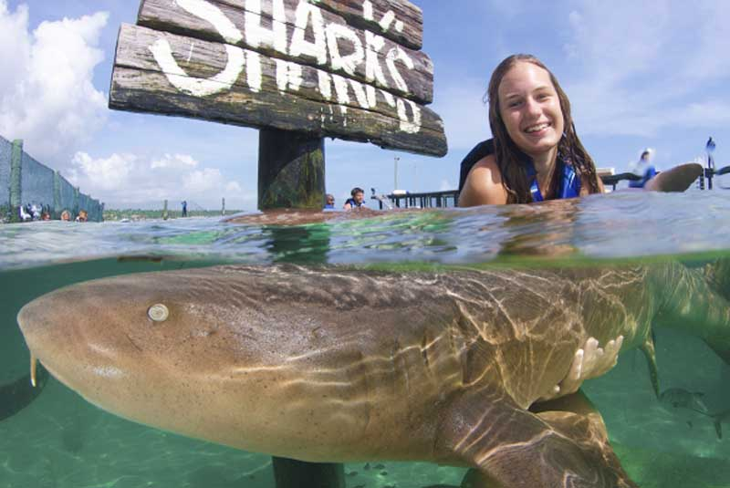 girl interacting with nurse shark at Dolpjin Island in Punta Cana - Dominican Republic