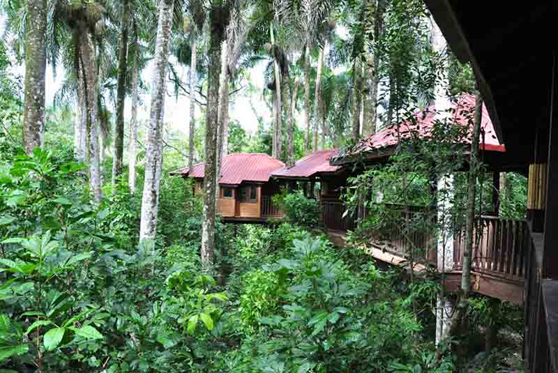 tree house in the middle of the jungle in barahona dominican republic