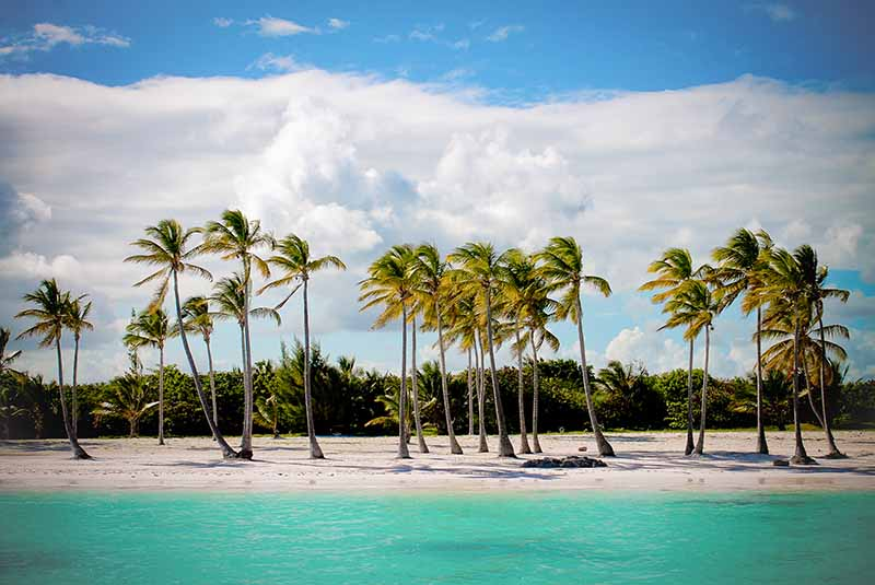 palm trees on Juanillo Beach in Cap Cana - Dominican Republic