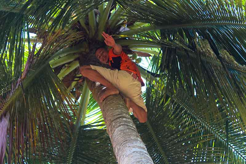 guide climbing up palm tree - Outback Adventures Dominican Republic